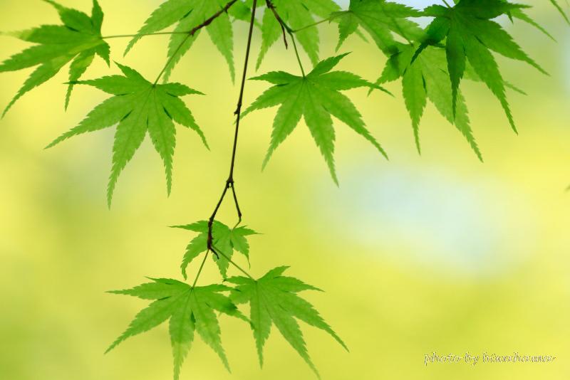 新緑の石山寺_b0055171_22584389.jpg
