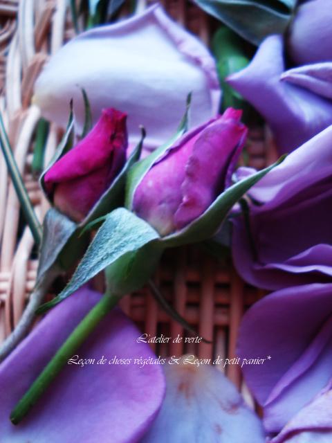 薔薇の物語~その①_b0365901_15391412.jpg
