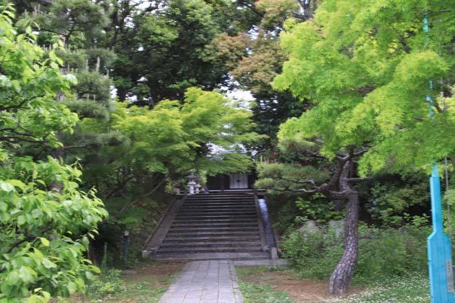 新緑の盛り 智積院_e0048413_22111251.jpg
