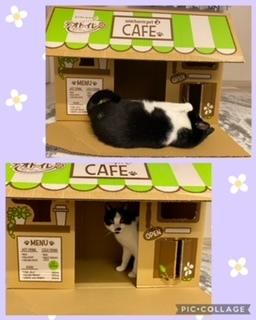 猫カフェ_a0108616_14593719.jpeg