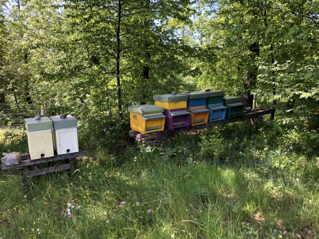 アカシアの蜂蜜_d0136540_02280826.jpeg