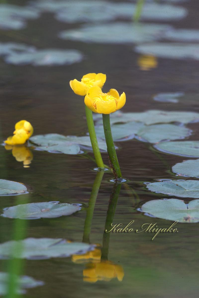 山野草(4月下旬に見た花)_d0013455_15385572.jpg