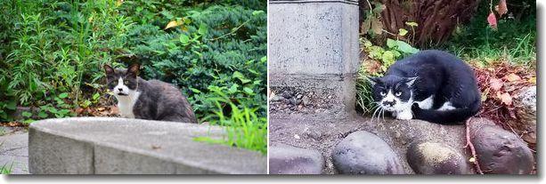 散歩で会った猫ちゃん達_d0089358_15591913.jpg