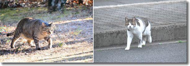散歩で会った猫ちゃん達_d0089358_15593220.jpg