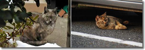 散歩で会った猫ちゃん達_d0089358_15594227.jpg