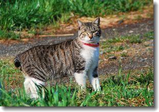 散歩で会った猫ちゃん達_d0089358_16001375.jpg