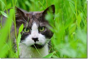 散歩で会った猫ちゃん達_d0089358_16002243.jpg