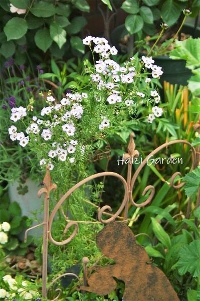 小花好きが惚れる花 - ハイジの玄関先ガーデン エピソード2♪