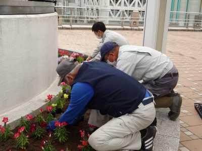 名古屋港水族館前花壇の植栽R3.5.12_d0338682_15041717.jpg