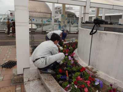 名古屋港水族館前花壇の植栽R3.5.12_d0338682_15092470.jpg
