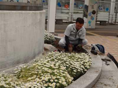 名古屋港水族館前花壇の植栽R3.5.12_d0338682_15101148.jpg
