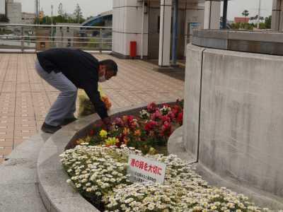名古屋港水族館前花壇の植栽R3.5.12_d0338682_15101864.jpg