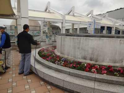 名古屋港水族館前花壇の植栽R3.5.12_d0338682_15102956.jpg