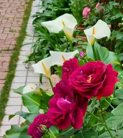 ◆赤の魅力_e0154682_23384882.jpg