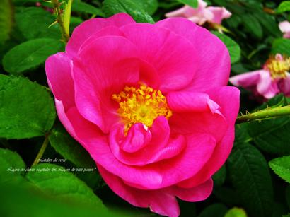 薔薇の物語~その②_b0365901_10211014.jpg