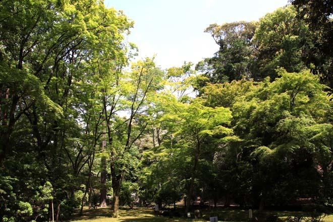 上賀茂神社 青もみじなど_e0048413_16322512.jpg