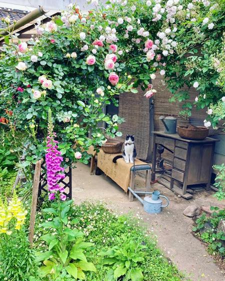 咲き乱れる古民家のバラ。_d0077603_12313625.jpg