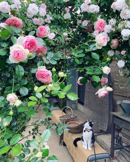 咲き乱れる古民家のバラ。_d0077603_12314332.jpg