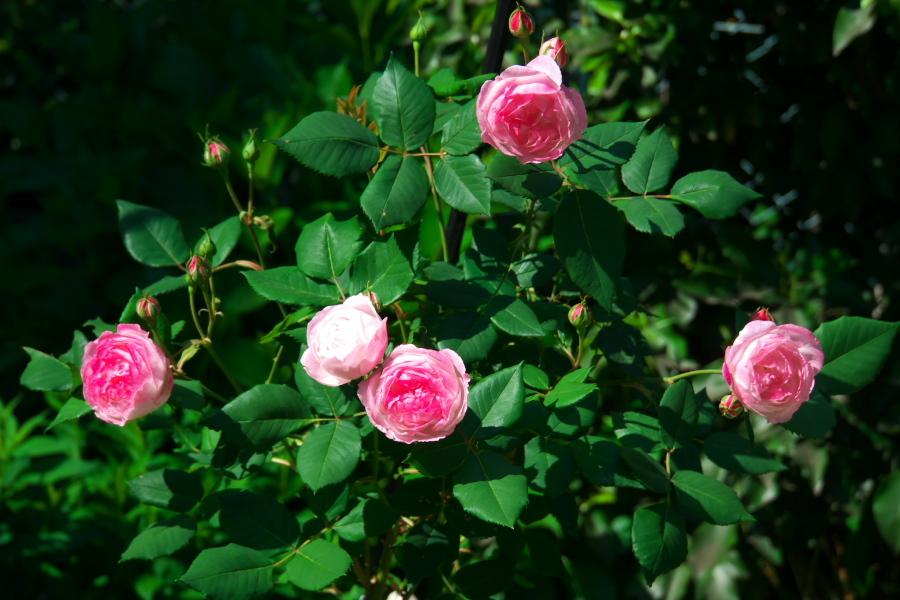 4月の我が家の庭1_a0263109_19111025.jpg