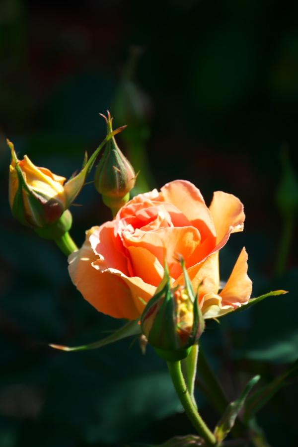4月の我が家の庭1_a0263109_19111079.jpg