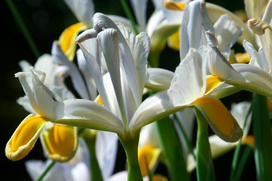 4月の我が家の庭1_a0263109_19111090.jpg