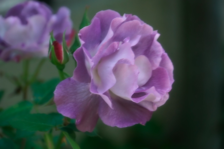 4月の我が家の庭1_a0263109_19111169.jpg