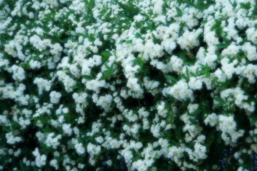4月の我が家の庭1_a0263109_19111173.jpg