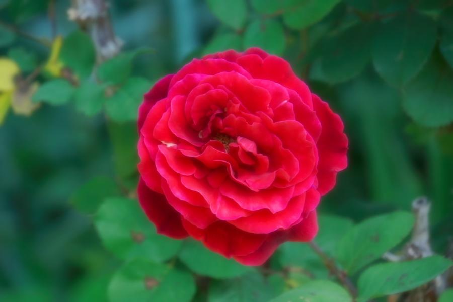 4月の我が家の庭1_a0263109_19111199.jpg