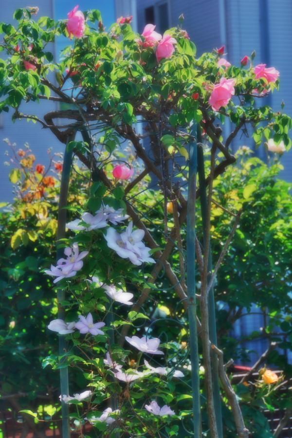 4月の我が家の庭1_a0263109_19113449.jpg
