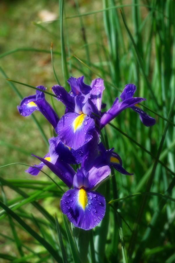 4月の我が家の庭1_a0263109_19113550.jpg