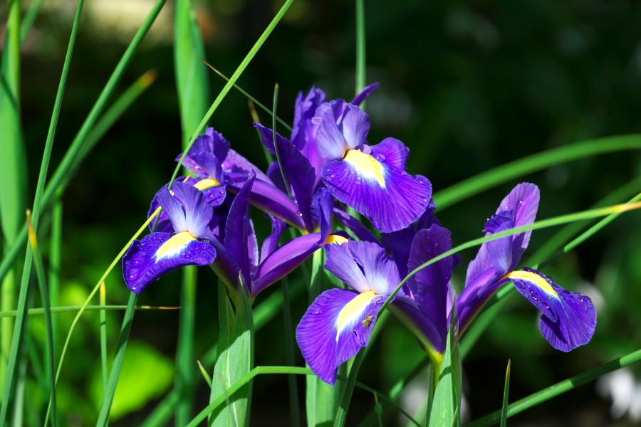 4月の我が家の庭1_a0263109_19113552.jpg
