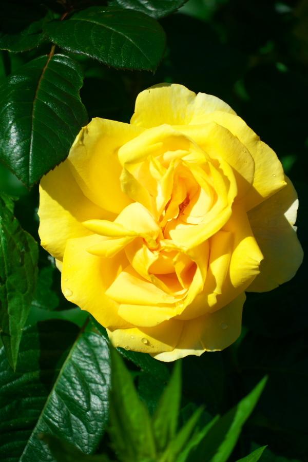 4月の我が家の庭1_a0263109_19115717.jpg