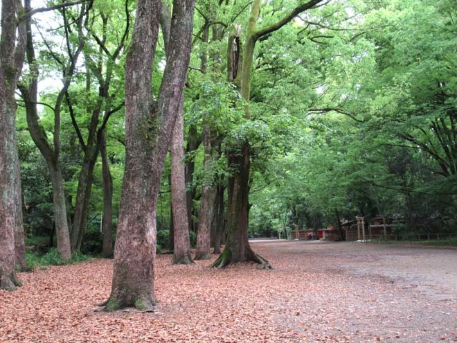 下賀茂神社 深緑の森を本殿へ_e0048413_14541057.jpg