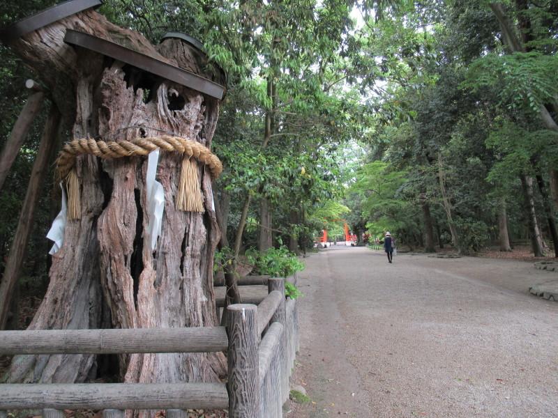 下賀茂神社 深緑の森を本殿へ_e0048413_15025005.jpg