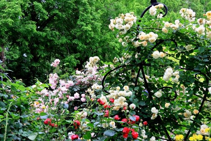 混んでいた四季の香りローズガーデン_b0325217_18205004.jpg