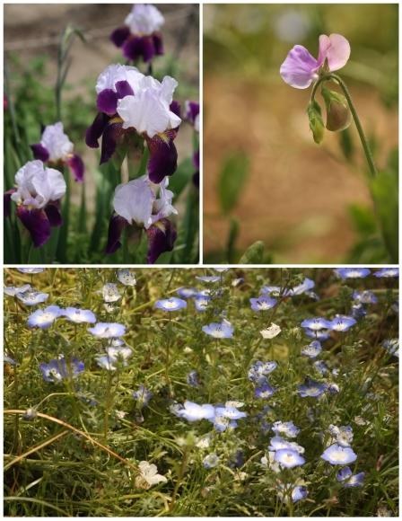 癒やしの花々_c0163618_16315743.jpg