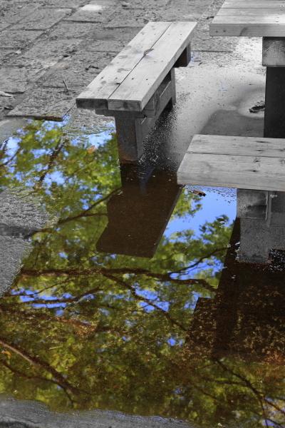 大雨の翌朝 Ⅱ_f0057178_10392658.jpg