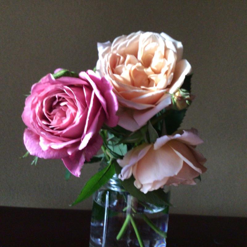 花径13センチ強の黄色のバラとバッハ_c0404712_23272150.jpg