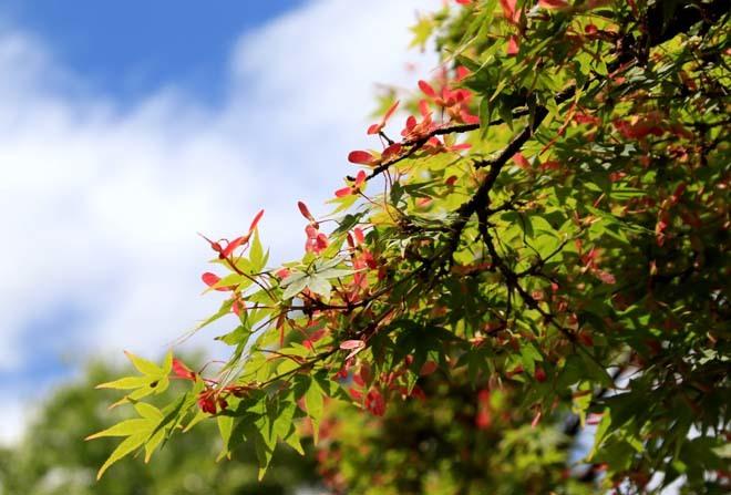 京都御苑 みどリが盛り1_e0048413_14155402.jpg