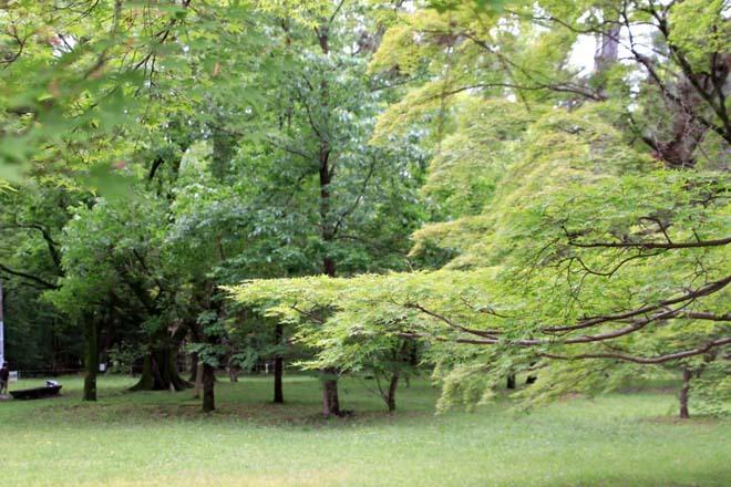 京都御苑 みどリが盛り1_e0048413_14160253.jpg