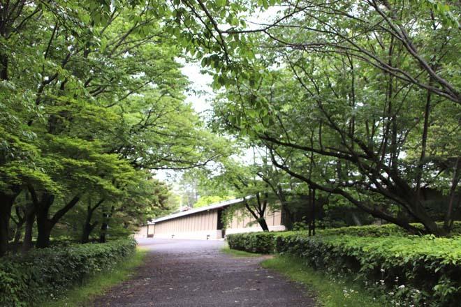 京都御苑 みどリが盛り1_e0048413_14160852.jpg