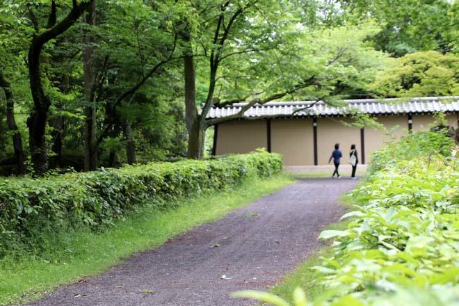 京都御苑 みどリが盛り1_e0048413_14161564.jpg