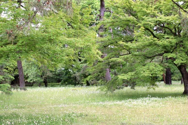 京都御苑 みどリが盛り1_e0048413_14163233.jpg
