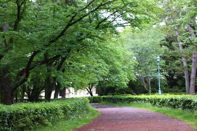 京都御苑 みどリが盛り1_e0048413_14163710.jpg