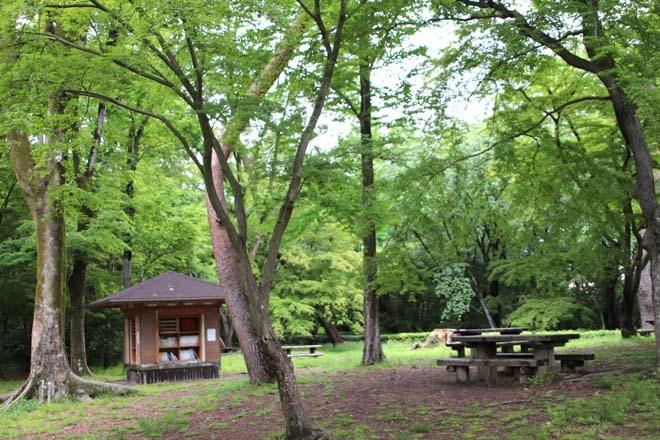 京都御苑 みどリが盛り1_e0048413_14300900.jpg
