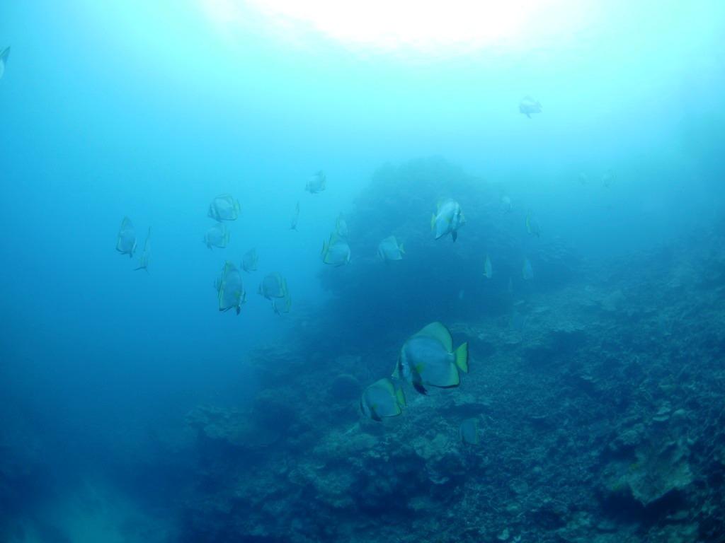 青い名蔵湾は久しぶり(#^^#)_a0189838_12333222.jpg