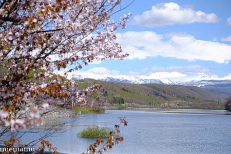 聖台ダムと桜VOL.2~5月の美瑛_d0340565_19533473.jpg