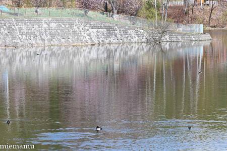 聖台ダムと桜VOL.2~5月の美瑛_d0340565_19535356.jpg