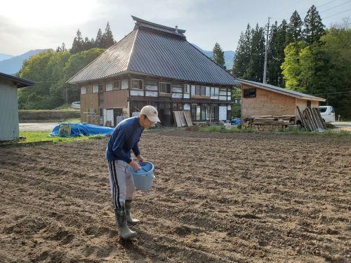 小麦の種蒔き_b0304722_12491365.jpg