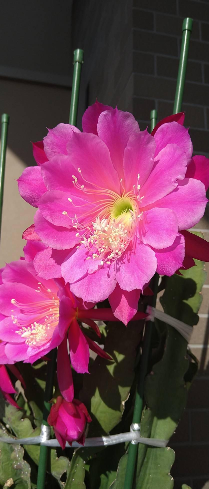 今年もキレイに咲いてくれました_b0148044_18131263.jpeg